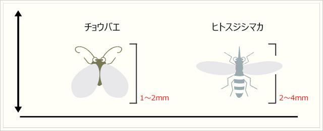(参考)ブラックネットを潜り抜けることができた一般的な虫のサイズ